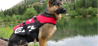Salvagente per cani: le migliori 5 pettorine per cani