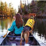A cosa serve un salvagente per cani