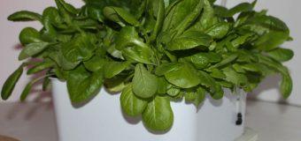 Miglior coltivatore idroponico: guida all'acquisto