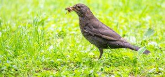 Alimenti per uccelli, i consigli da tenere sempre a mente