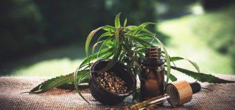 L'olio di canapa: tutti i vantaggi che il suo utilizzo comporta