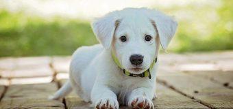 Distributori automatici per la pappa del cane: un'introduzione
